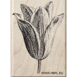 Hampton Art Tulip Stamp